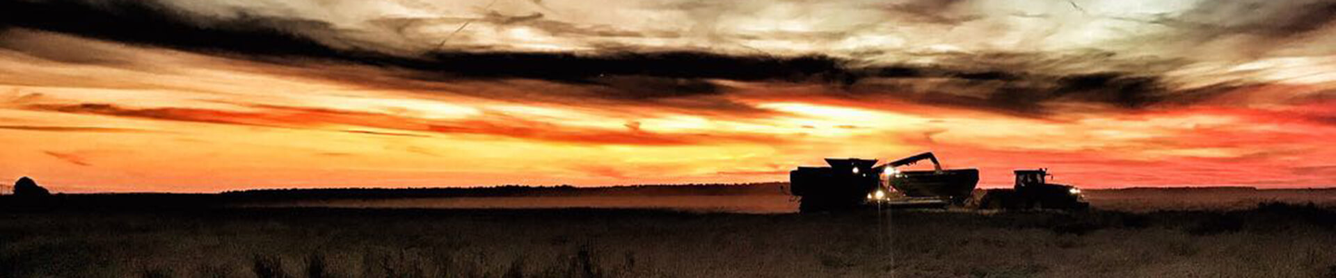 Grain Harvester working in the dusk
