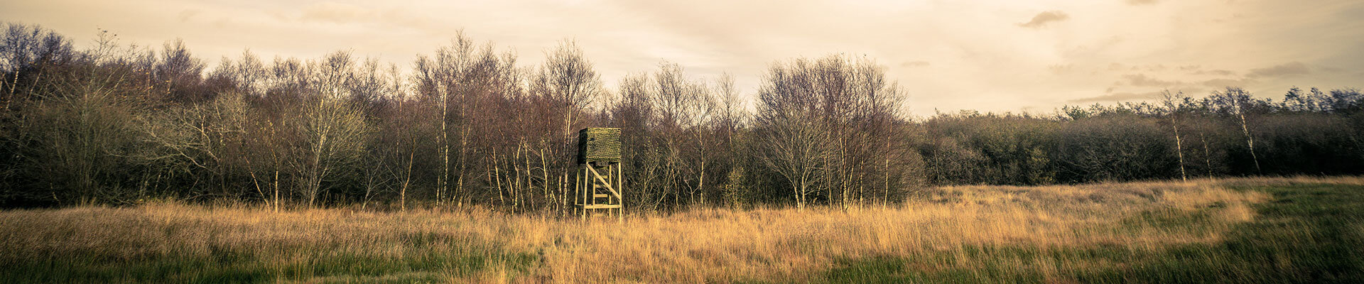 Hunting land in the fall with a deer stand