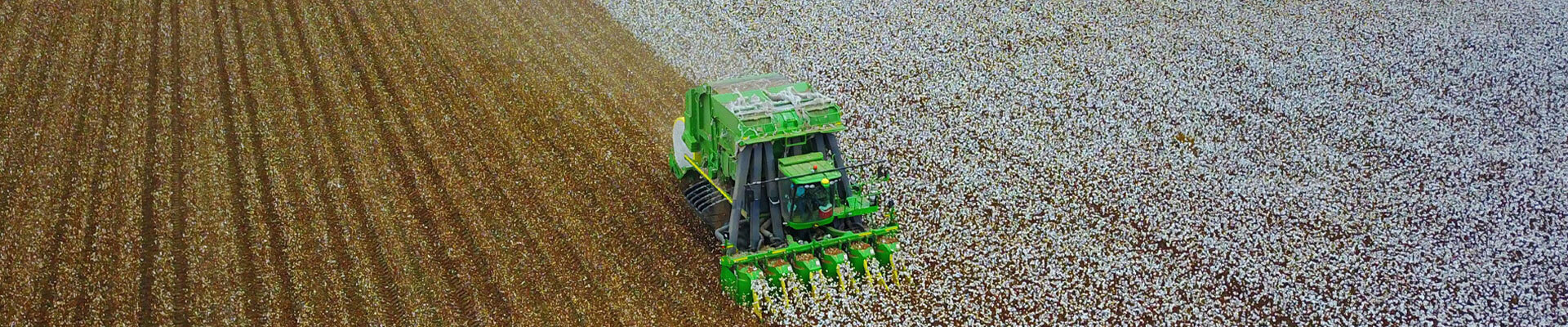 A Cotton Picking Machine Harvesting Cotton