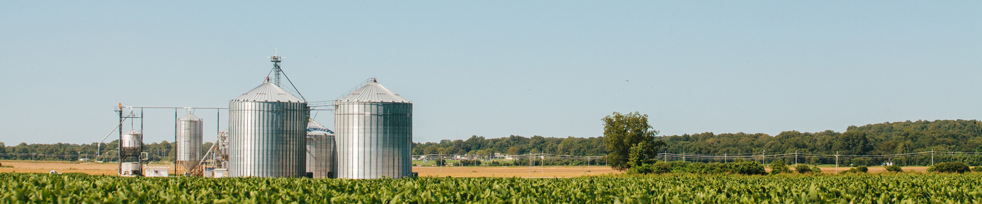 Field and grain bins with trees in the background.